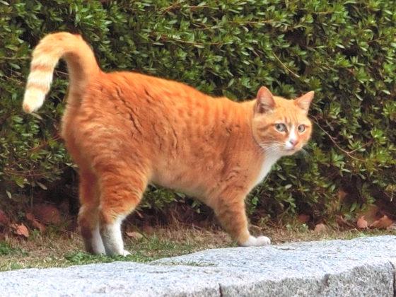 びっくりしてる猫