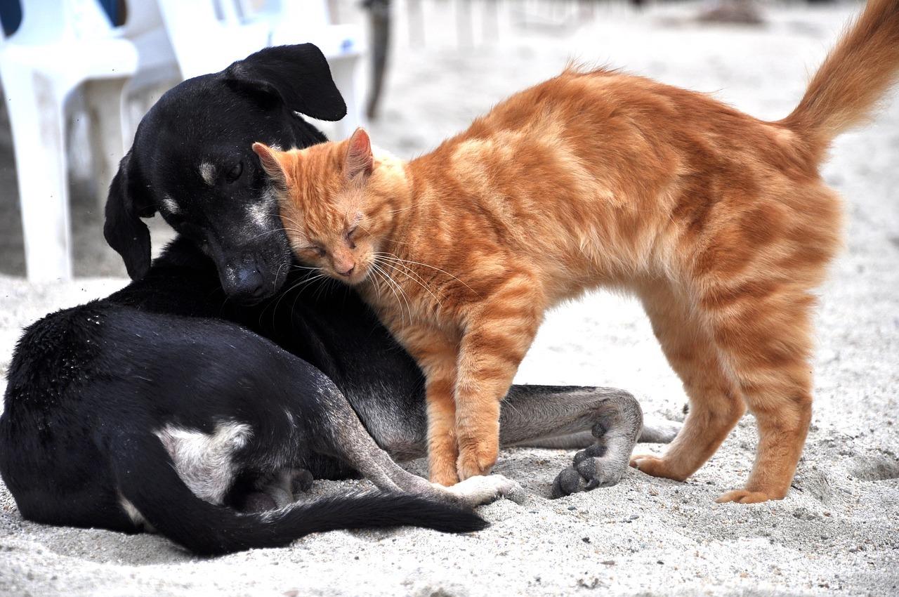 犬に頬ずりする茶トラ猫