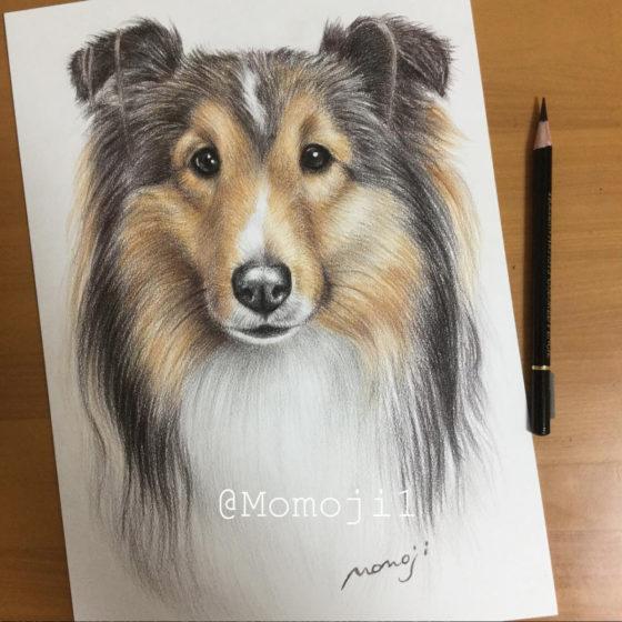 momojisan_dogportrait2