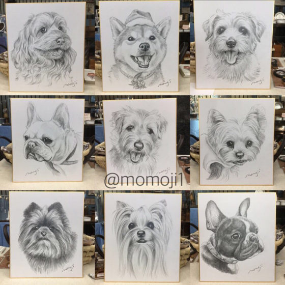 momojisan_dogportrait20
