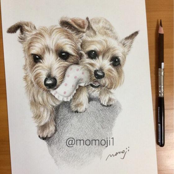 momojisan_dogportrait19