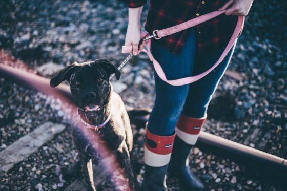 リードに繋がれた犬