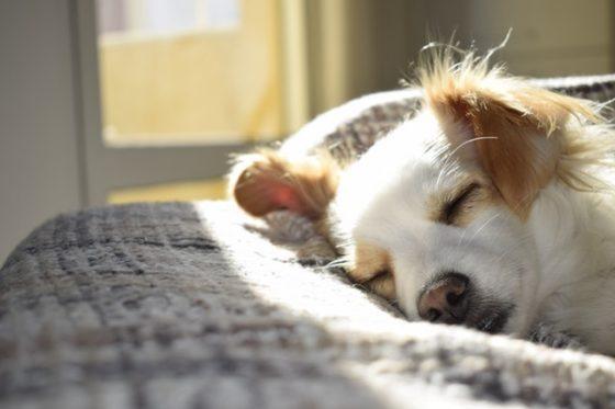 安心して眠る犬