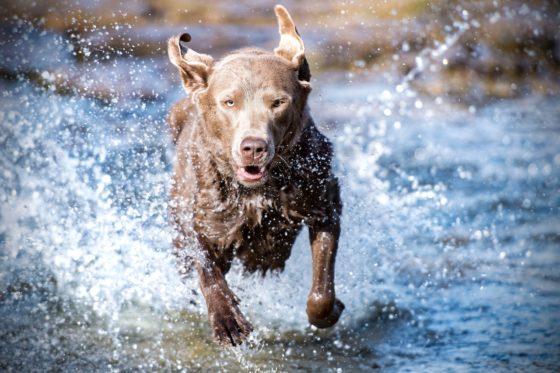 水辺を走りこちらに向かってくる犬
