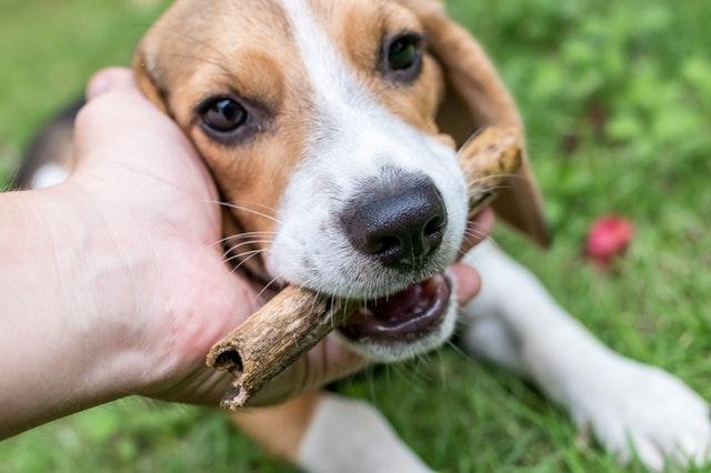 犬 早食い 理由