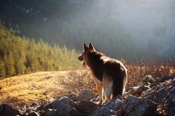 大自然の中の犬