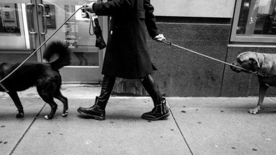 犬をリードにつなぎ歩く女性
