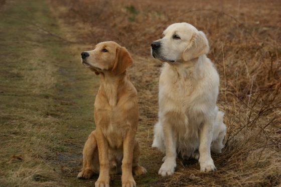 揃って左を向く二匹の犬