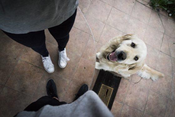 上目遣いで見上げる犬