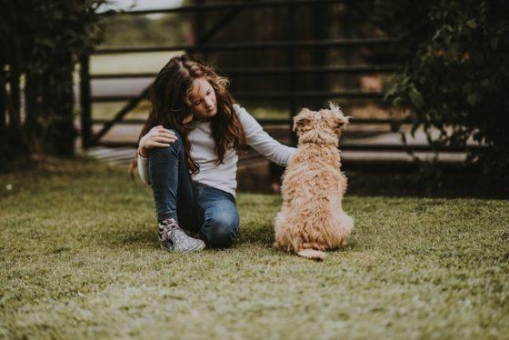 犬の声が枯れるのはもしかして呼吸器の病気?