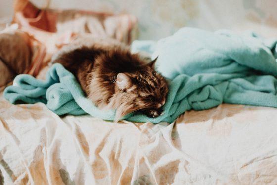 タオルに囲まれた猫