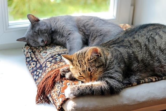 2匹の猫就寝