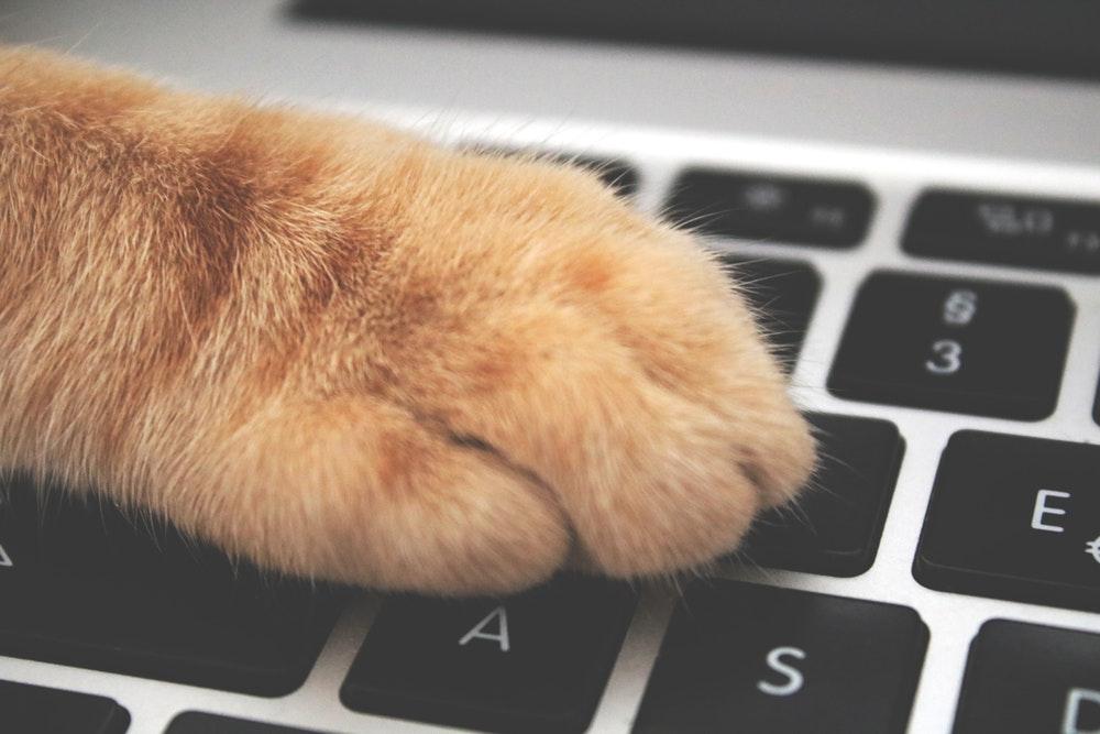 キーボード猫の手