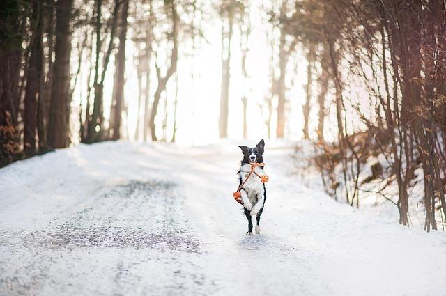 犬が寒さに弱いというのは本当?