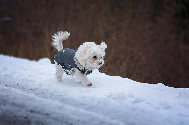 室内犬の寒さ対策6選