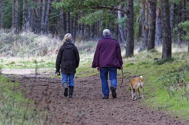 犬,寒い,寒さ対策,防寒,散歩,冬