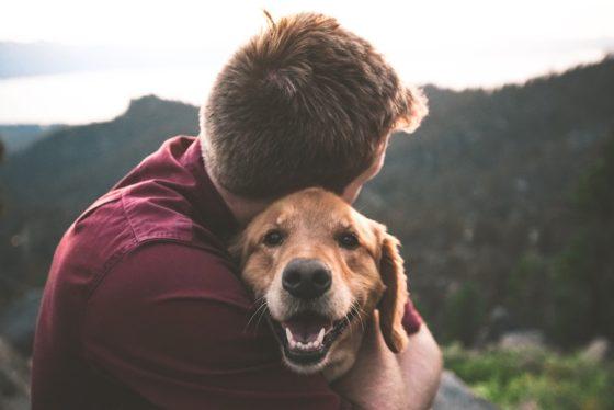 犬の声が枯れているのはもしかして吠えすぎ?