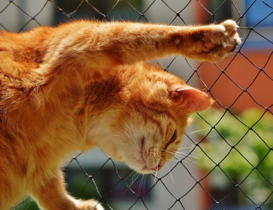 猫 声 枯れる ガラガラ 喉頭炎