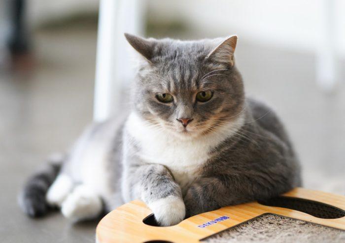 猫,爪とぎ,おすすめ,素材,おしゃれ,インテリア