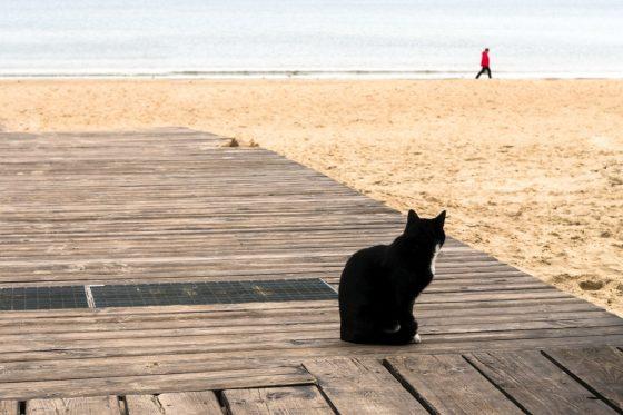 猫 声 枯れる ガラガラ ストレス