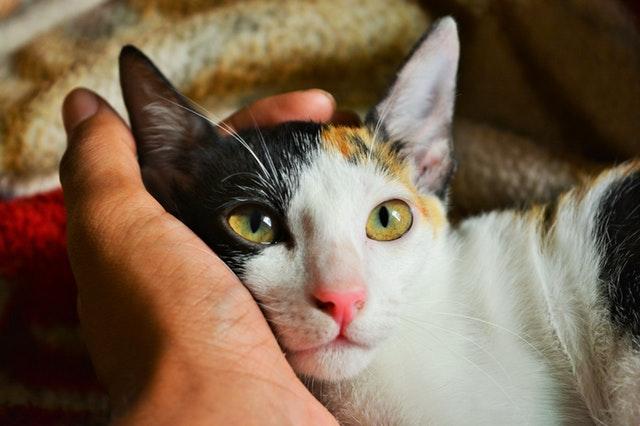 手の中の猫