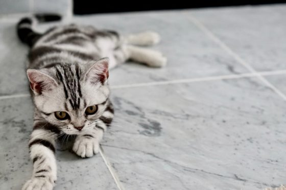 タイル上猫