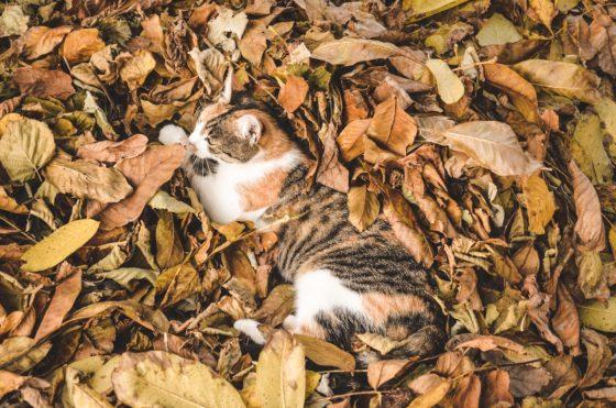 落ち葉に埋もれる猫