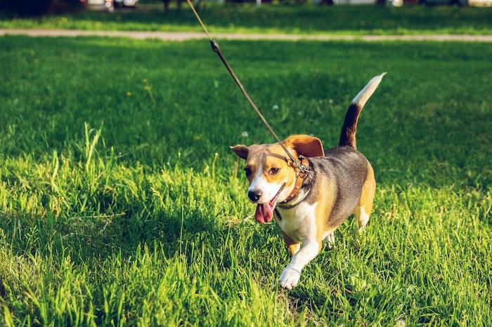 犬,散歩,マナー,ルール,しつけ