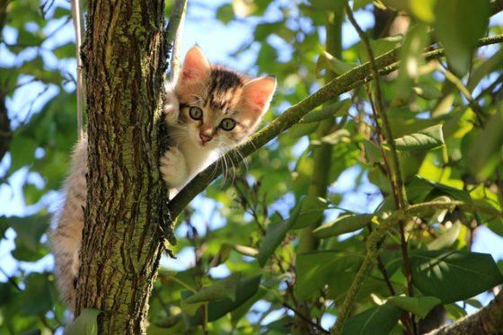 気に登る子猫