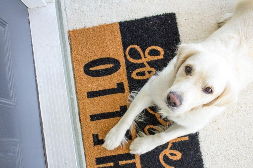 シャンプー 冬 犬 風邪 冷え 対策