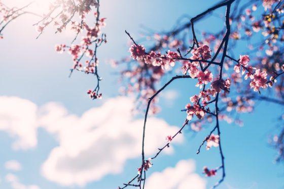 大阪城公園でペットとお花見を楽しもう