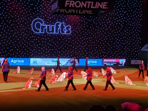 crufts2019-show