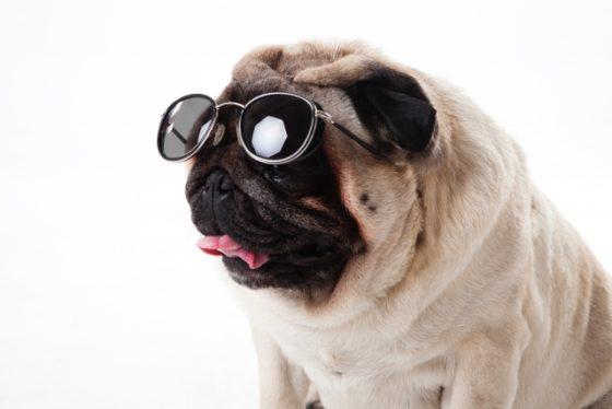 潮干狩りに行くサングラスの犬