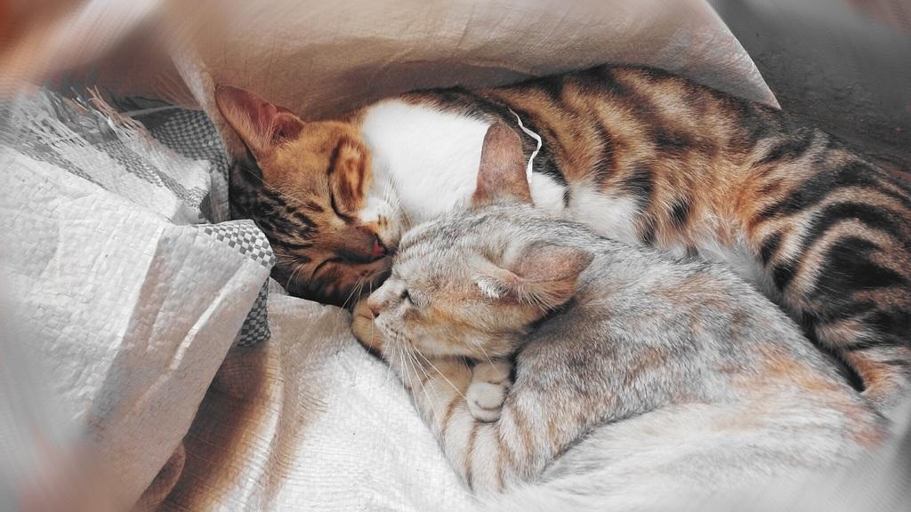寝ている猫たち