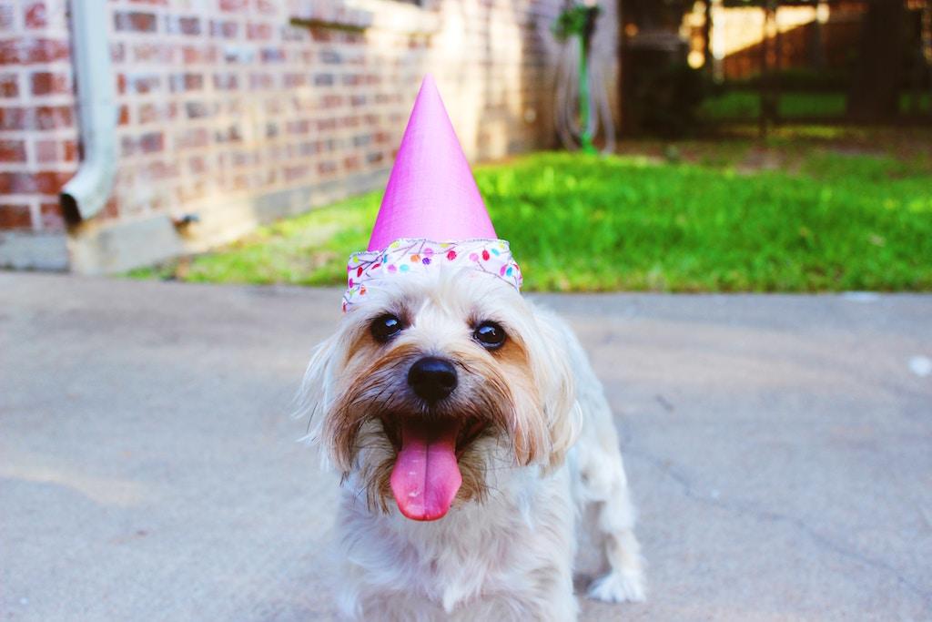 パーティー犬