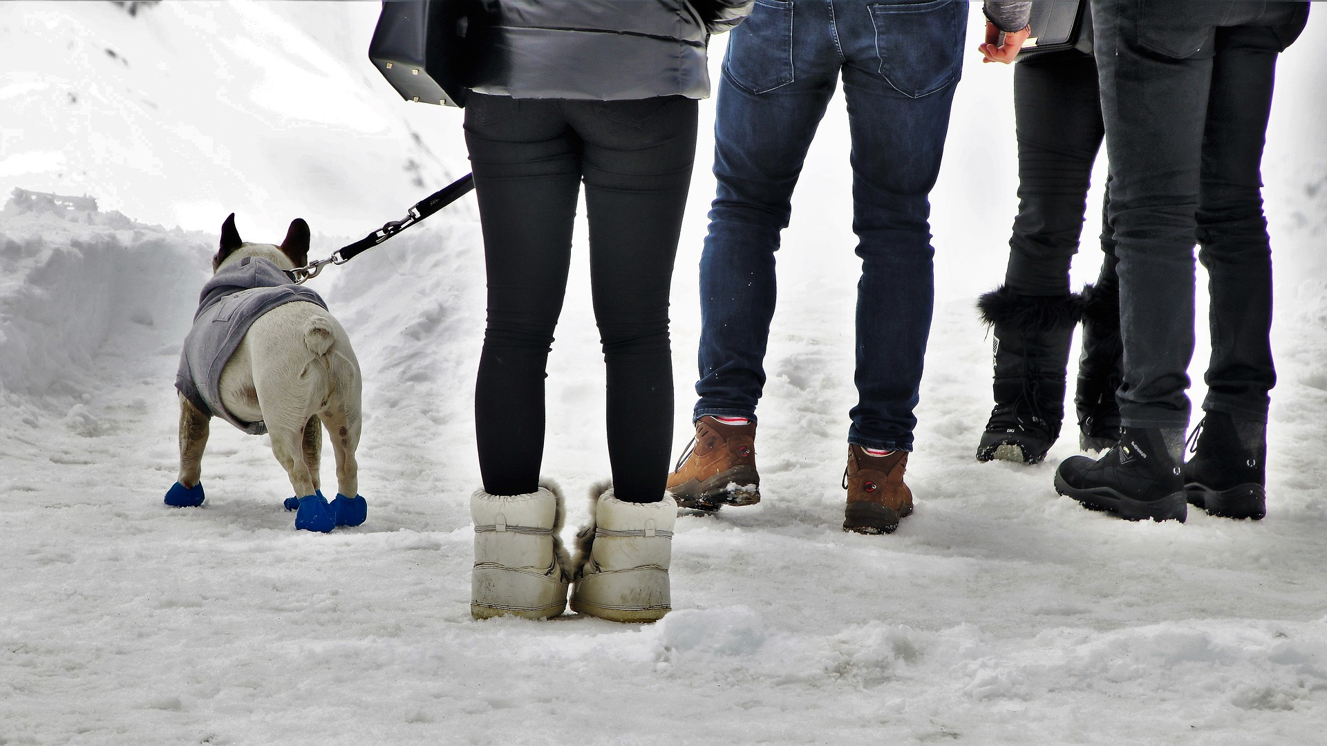 犬 雪 シューズ