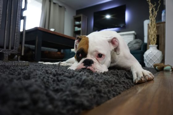 保護されて家で過ごす犬