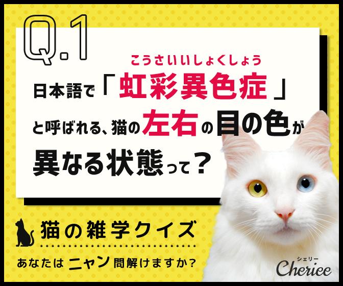あなたはニャン問解けますか?猫の雑学クイズ