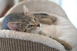 猫 声 枯れる ガラガラ 手術