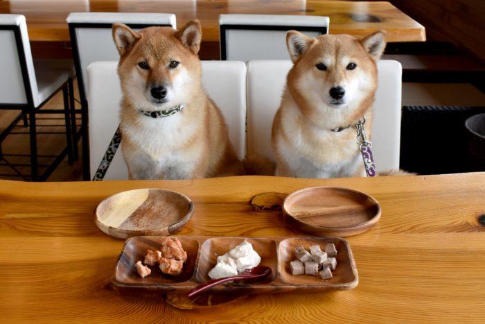 犬が食事を待つ光景