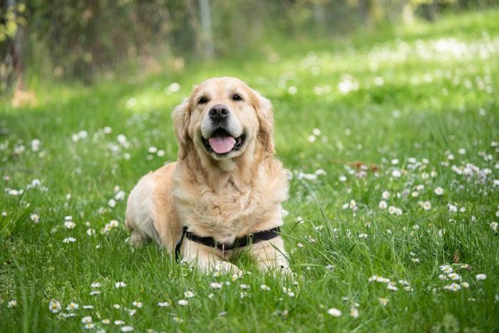 ペットに対するバイオ治療と未来
