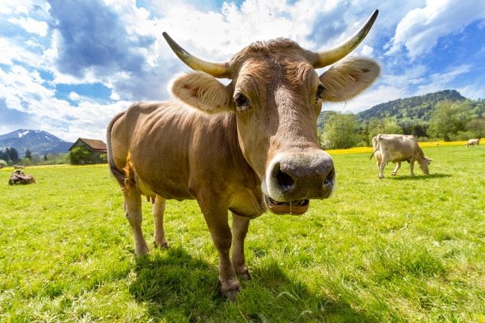 Airbnbのアニマル体験で世界の動物たちに触れよう