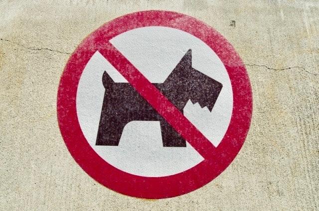 新型コロナウイルスでペットの飼育禁止と処分を促すマンションも