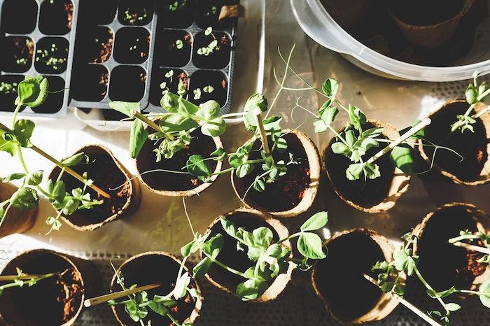 殺虫剤、除草剤による犬の中毒