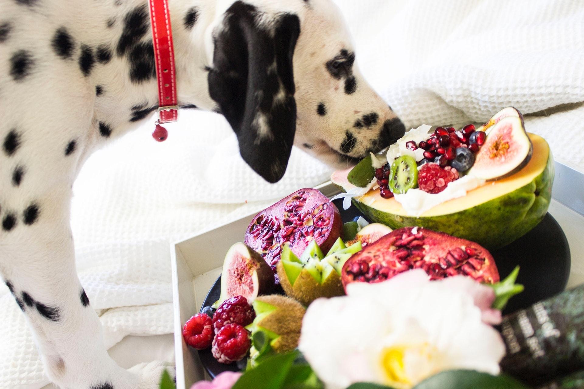 犬の健康チェックポイント