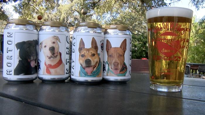 缶ビールのラベルがきっかけでヘイゼルは飼い主の元に