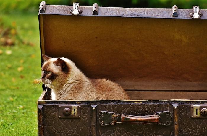 子猫にキャリーケースに慣れさせよう