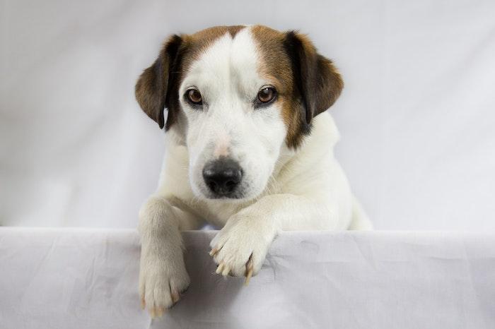 新型コロナウイルス対策にも探知犬が活躍する日が近いかもしれない