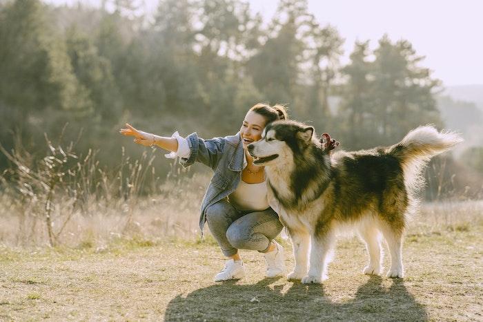 犬肉 文化 倫理 批判