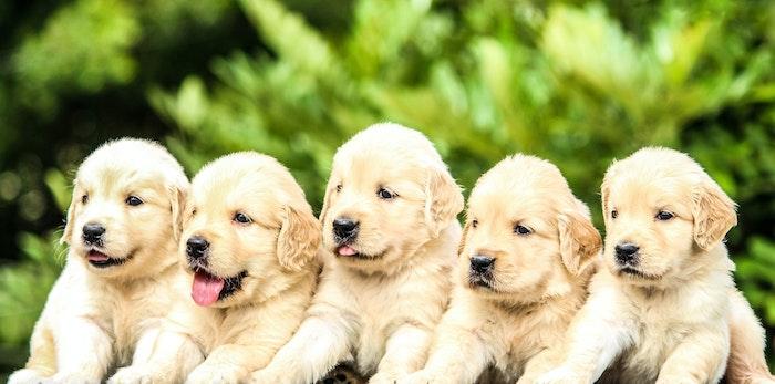社会化期にやるべきこと③他の犬に慣れさせる